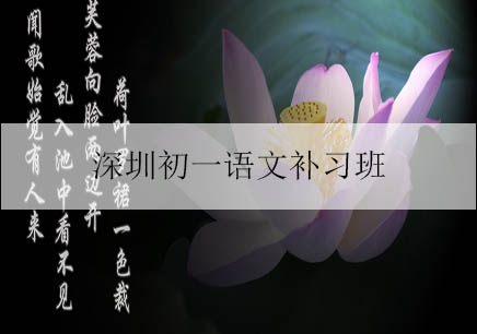 深圳初一语文补习班